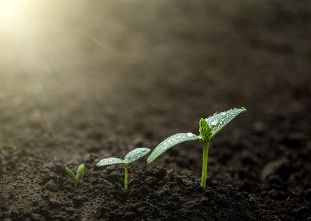 seedlings growing in earth